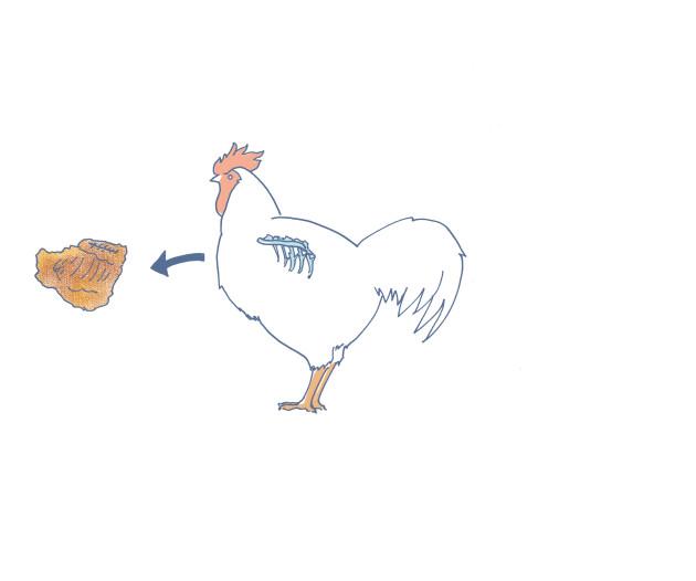 chicken_rib